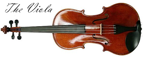Viola - Article Image
